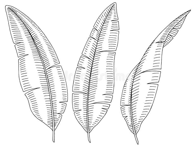 Banana palm leaf graphic black white isolated sketch illustration royalty free illustration