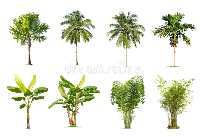 Banana, palm tree, bamboo on isolated background. stock photography