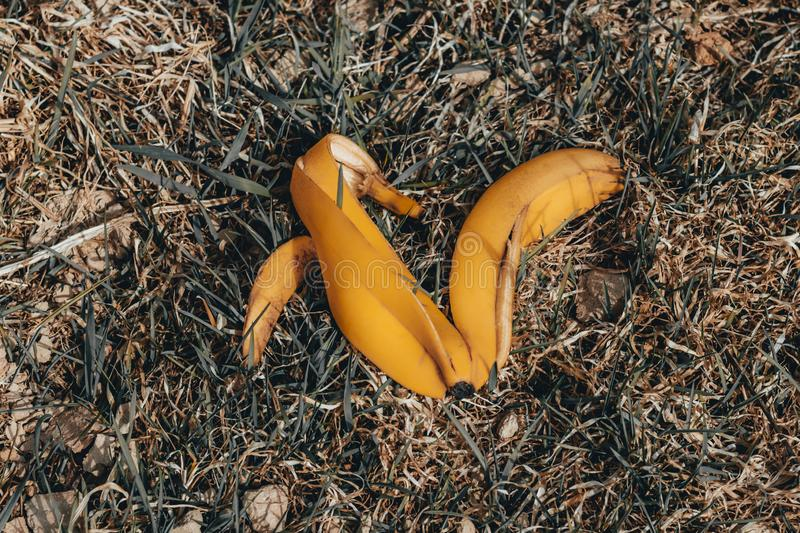Banana peel on dry grass. daylight. there is toning stock photos