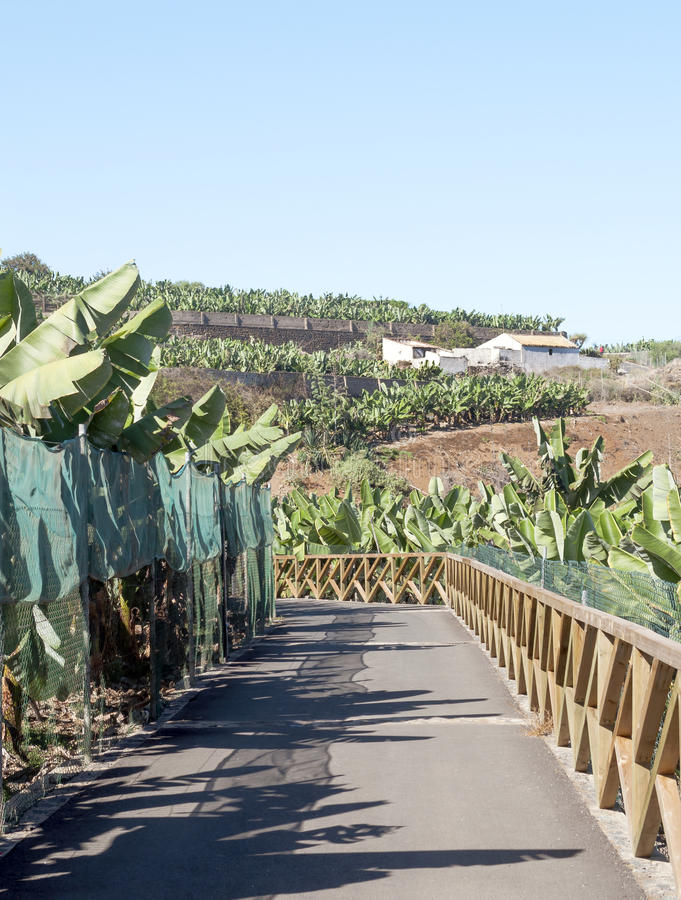 Download Banana Plantation With Road Stock Images - Image: 26844004