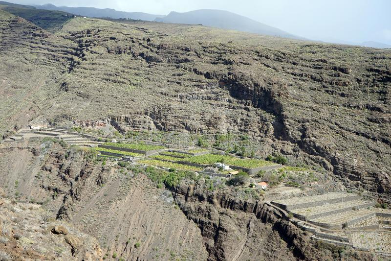 Banana plantation. On the slope of rock on the La Gomera island, Spain royalty free stock images