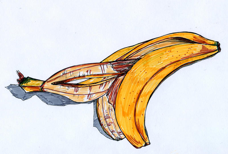 Banana rind sketch. Hand drawn ink and markers sketch of a yellow banana rind with grey shadow stock illustration