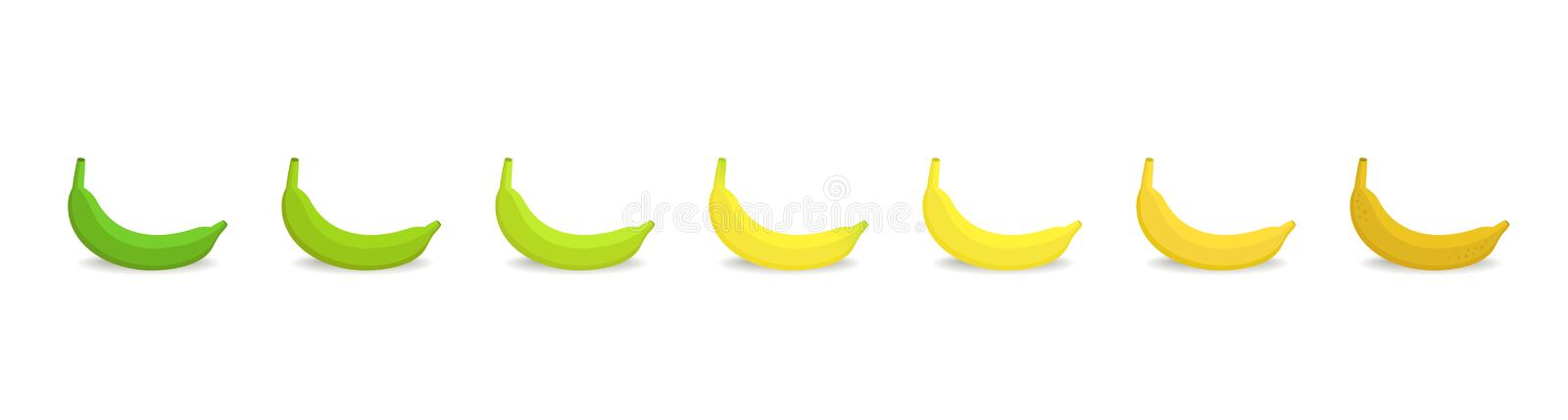 Banana ripeness stages chart. Colour gradation set plant. Ripening plantains. Musa paradisiaca. From green to yellow and brown. Animation period progression royalty free illustration