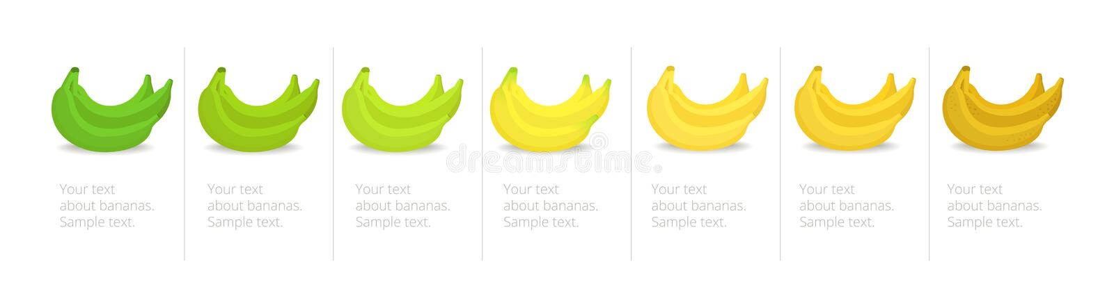 Banana ripeness stages infographics chart. Bunch of bananas colour gradation set. Ripening plantains. From green to yellow and. Brown. Animation period royalty free illustration