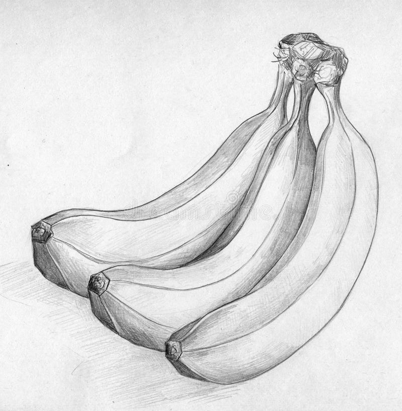 Download Banana Sketch Stock Illustration Of Image