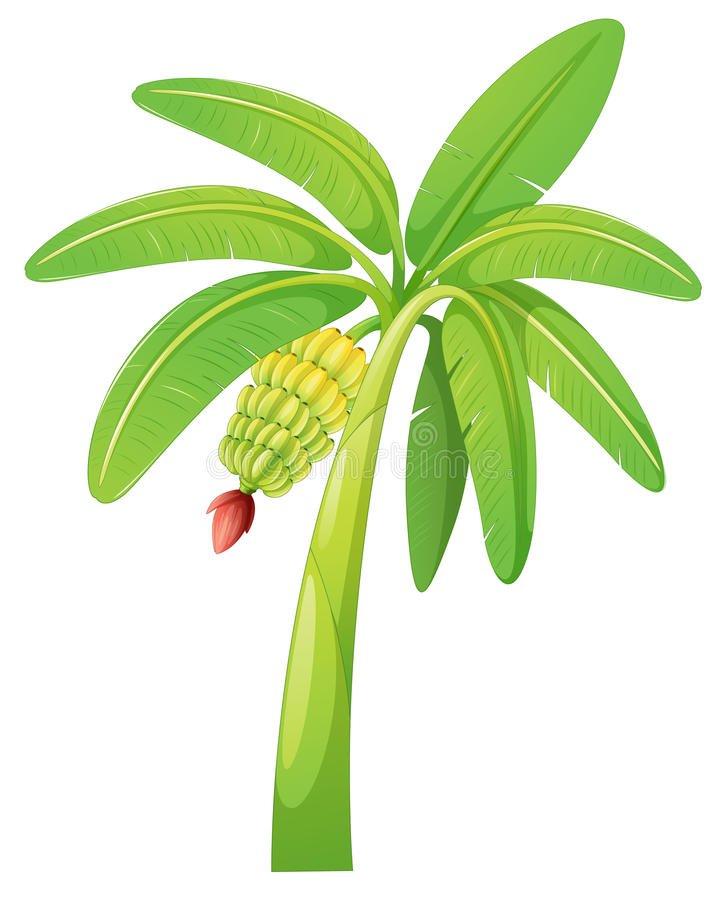 Banana tree royalty free illustration
