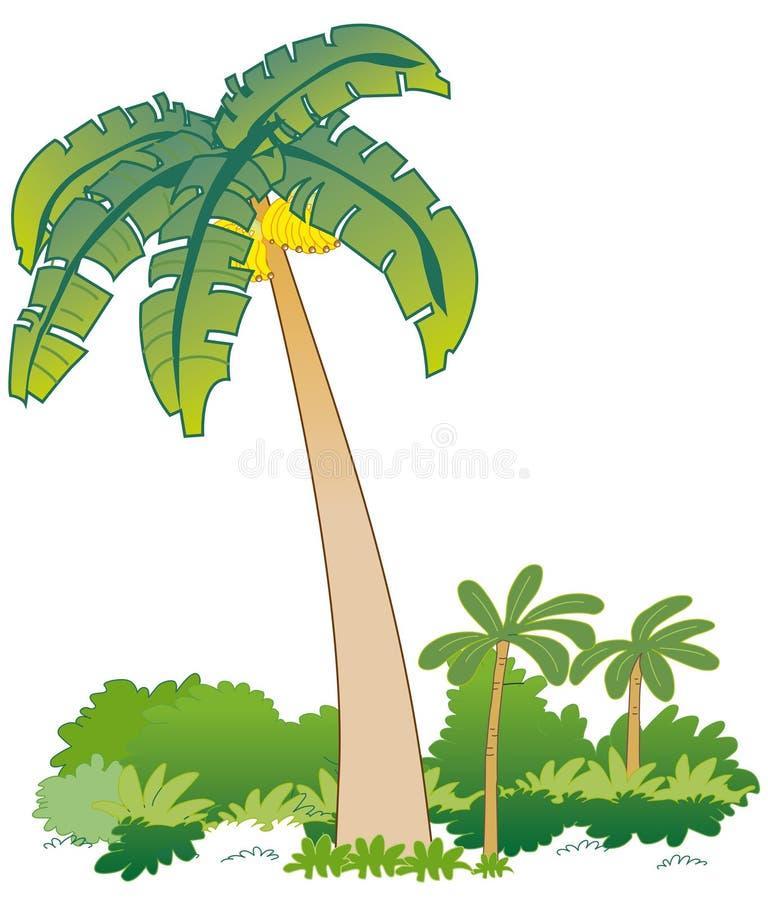 Banana Tree Stock Vector Illustration Of Ecuador