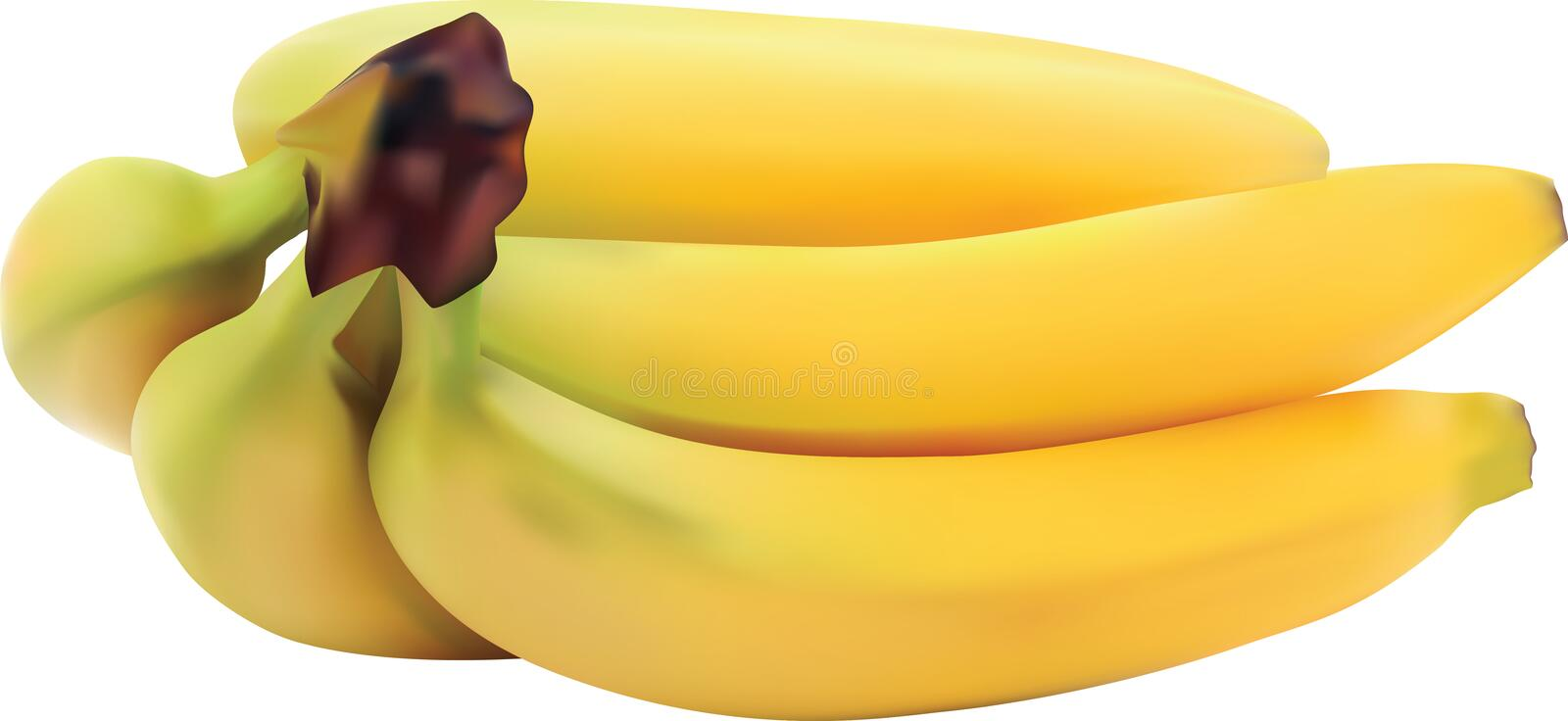 BANANA VECTOR REALISTIC ADOBE ILLUSTRATOR. Made using Adobe Illustrator with base , banana based on realistic stock illustration