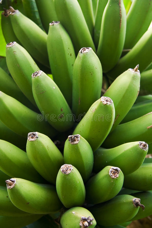 Banana verde foto de stock royalty free