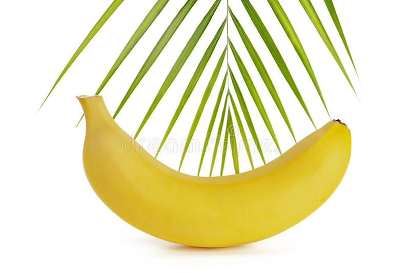 Banana on a white background with a sprig of paprotnik, isolate.  royalty free stock photo