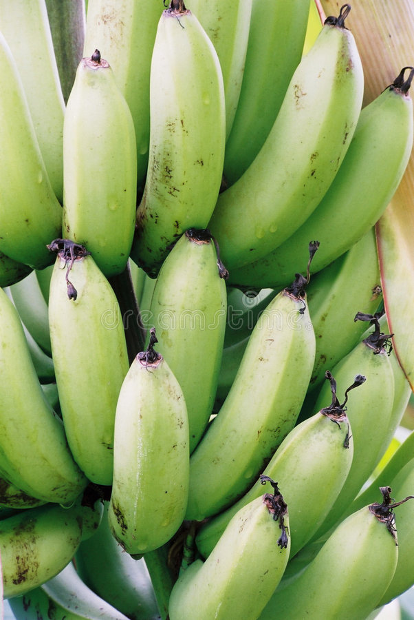 Download Bananas stock image. Image of fruit, taste, banana, bunch - 13523
