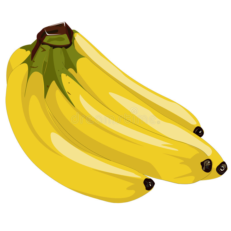 Bananas. A Bunch of Bananas done as a Vector Illustration vector illustration