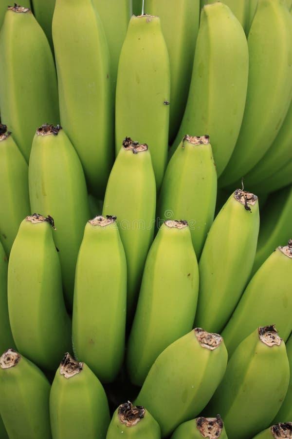 Bananas imagens de stock royalty free