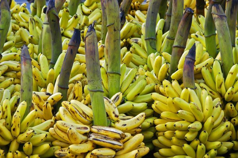 Download Bananas stock image. Image of organoc, market, alot, vitamins - 6014657