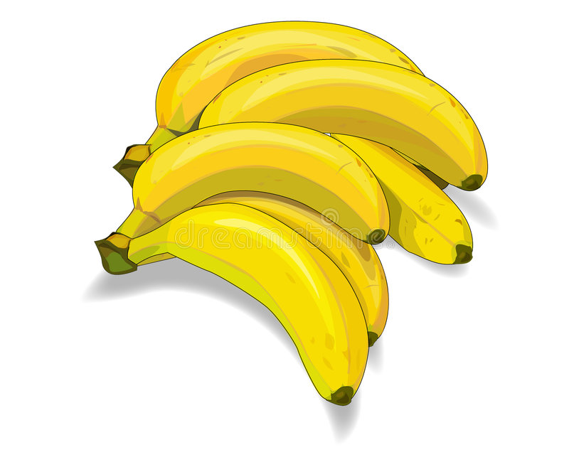 Bunch of bananas illustration. Illustration of bunch of yellow ripe bananas isolated on white royalty free illustration
