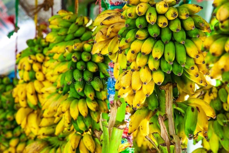 Bananas amarelas incontáveis, grupo das bananas na venda em uma tenda de rua foto de stock