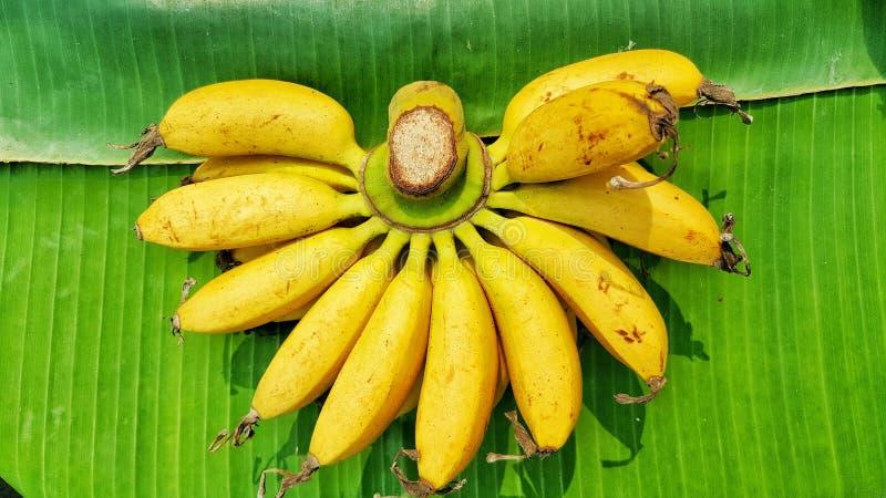 Bananas amarelas nas folhas verdes imagem de stock