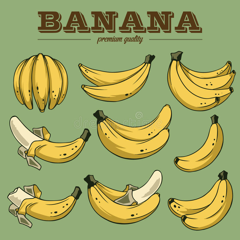 Bananas clipart. And illustrations for using in different spheres royalty free illustration