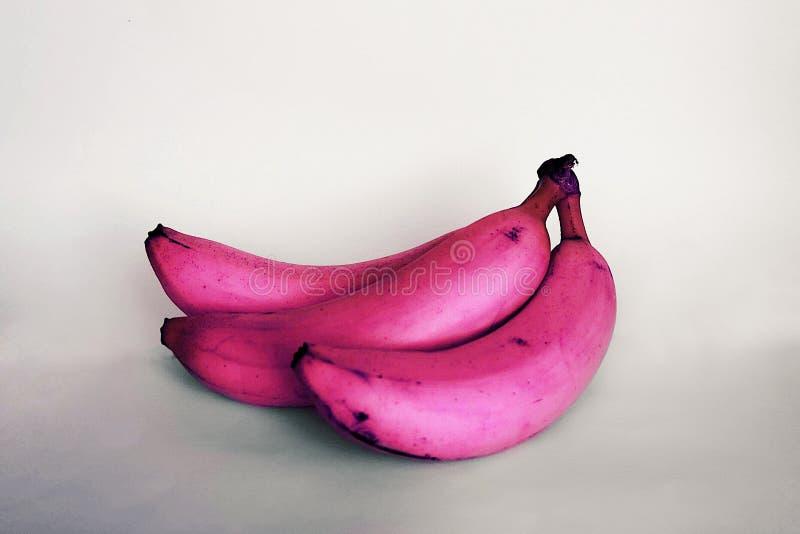 Bananas cor-de-rosa fotografia de stock