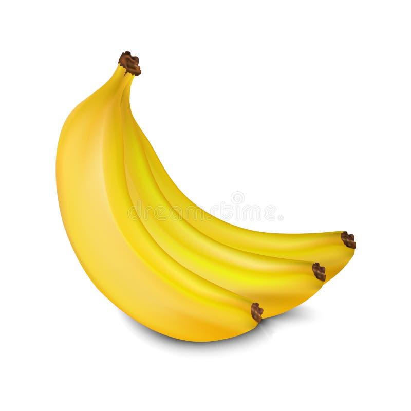 Bananas do vetor ilustração stock