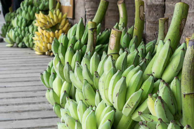Bananas harvesting from farm to market in close up stock image