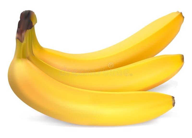 Bananas maduras ilustração stock