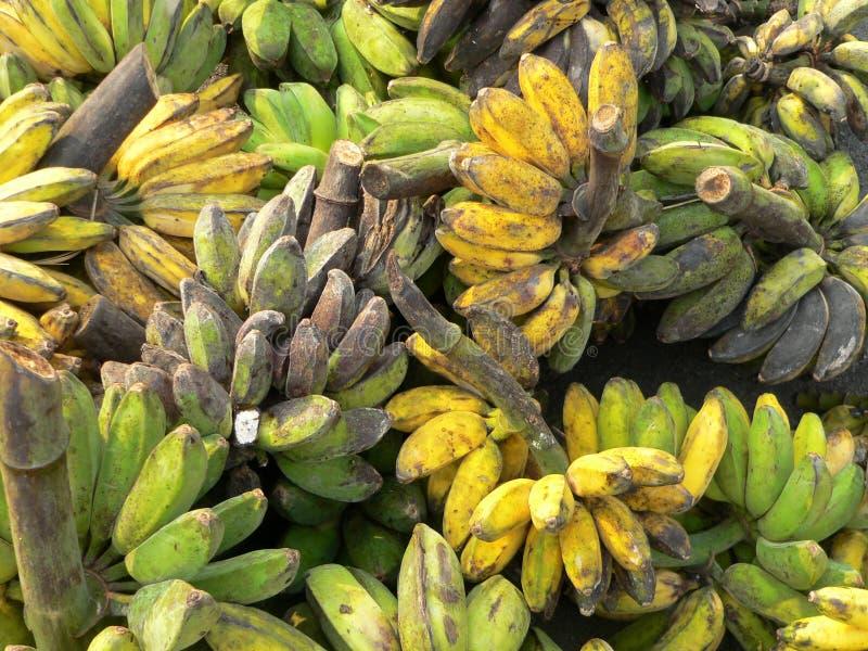 Bananas maduras & Unripe de Bornéu imagens de stock
