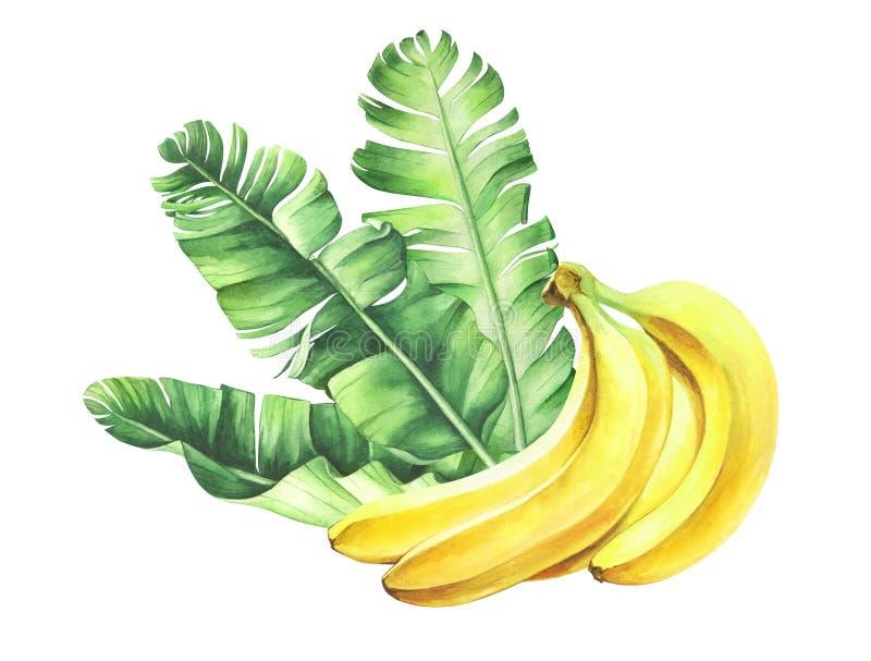 Bananas maduras da aquarela com as folhas isoladas no fundo branco ilustração do vetor