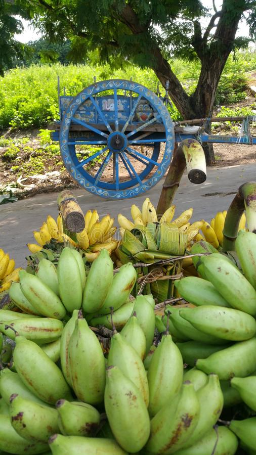 Bananas in the rural market in India. Bananas are one of the most widely consumed fruits in the world for good reason. Eating them could help lower blood stock photography