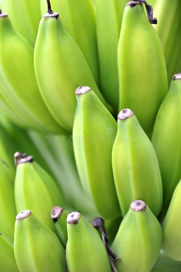 Bananas verdes frescas imagem de stock