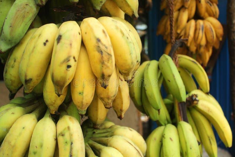 Very tasty bananas from Sri Lanka royalty free stock image