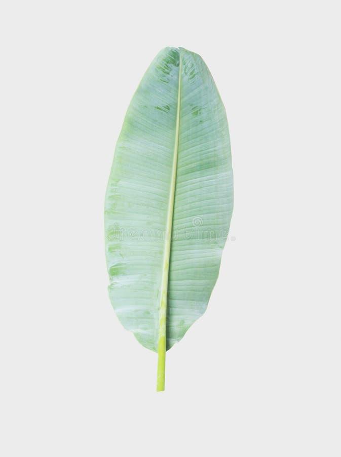 bananblad isolerat på grå bakgrund med den snabba banan royaltyfria bilder