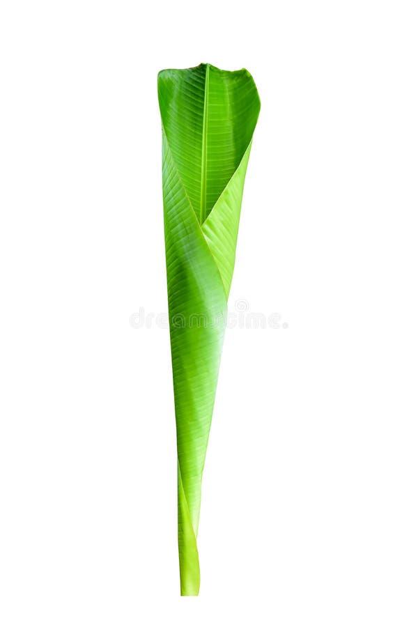 Bananblad p? vit bakgrund arkivbilder