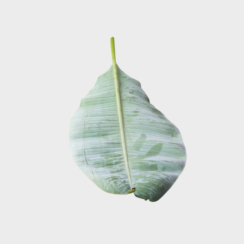 Bananblad som isoleras på vit bakgrund med den snabba banan royaltyfri foto
