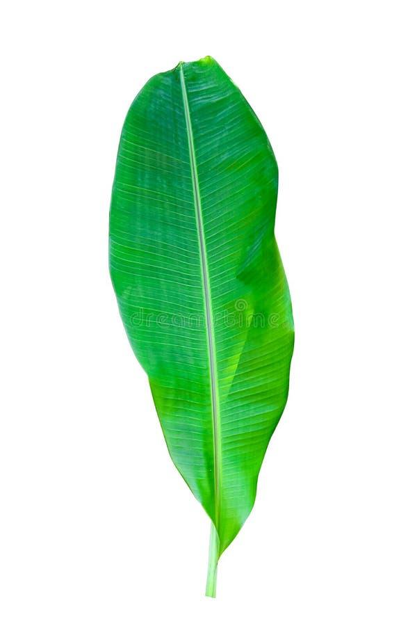 Bananblad som isoleras p? vit bakgrund fotografering för bildbyråer