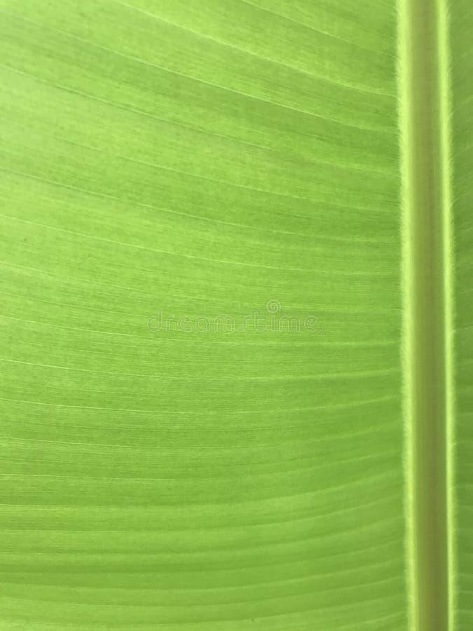 Bananbladcloseup arkivbilder