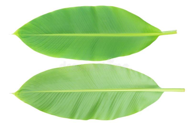 Bananbladframdel och tillbaka isolerat på vit bakgrund med den clupping banan arkivfoton