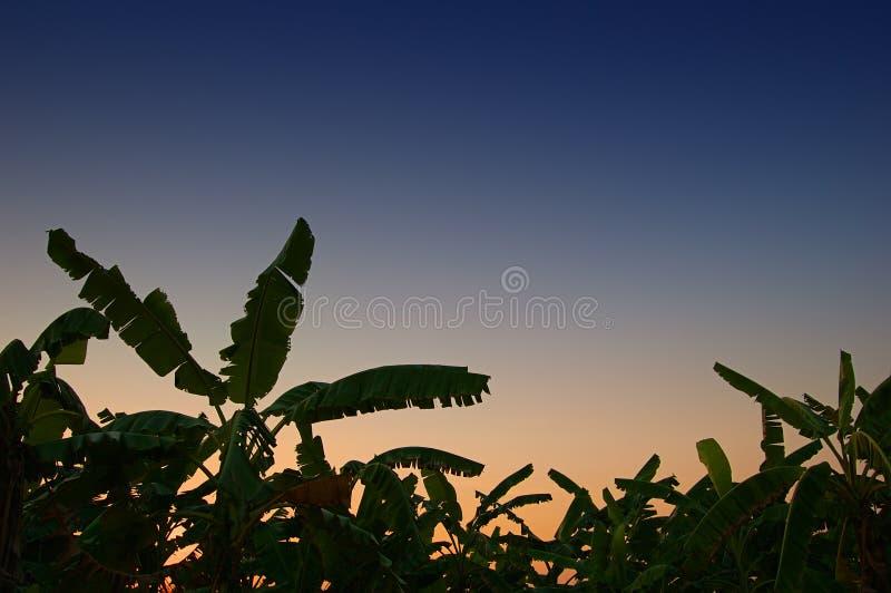 Download Banandunge arkivfoto. Bild av koloni, silhouette, nightfall - 516204