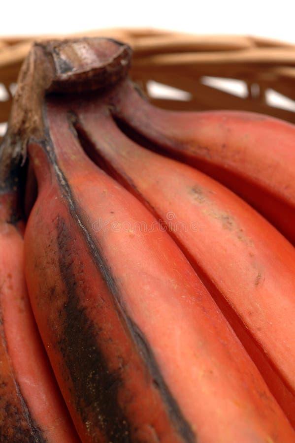 Download Banane photo stock. Image du chair, rouge, caribbean, mûr - 740630