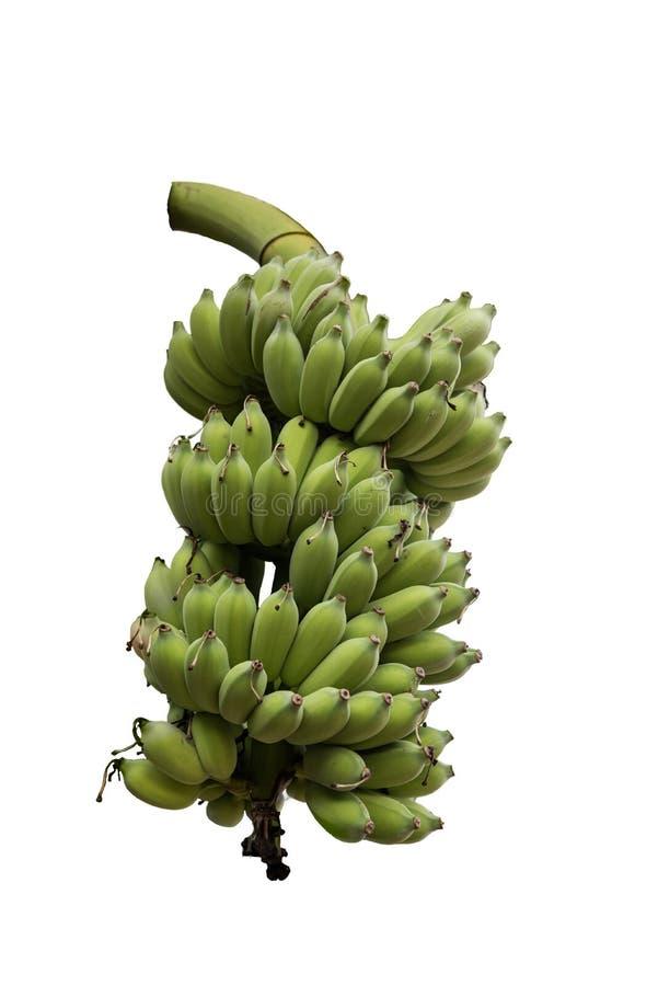 Banane auf weißem Hintergrund stockbild