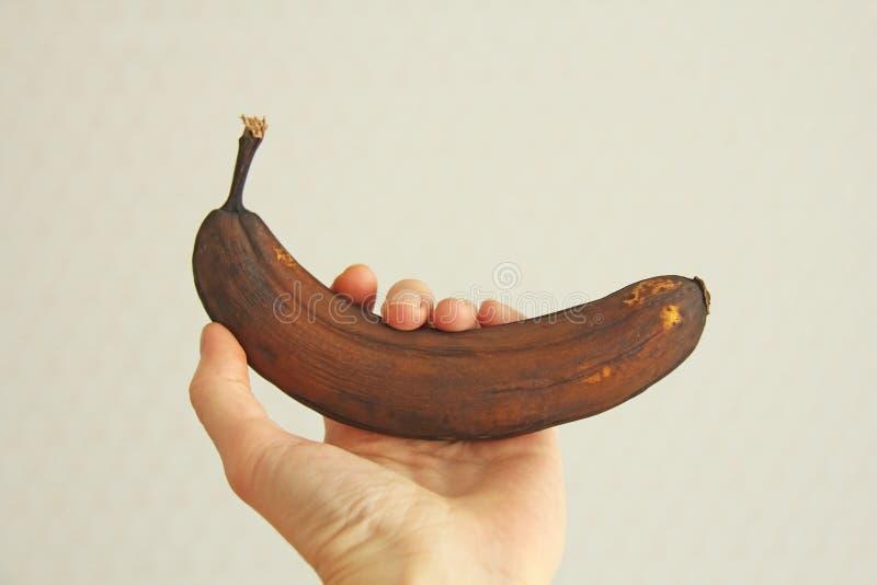 Banane corrompue noire à disposition Une main tient un fruit noir ou brun putréfié de banane Une banane putréfiée Banane noire co photographie stock