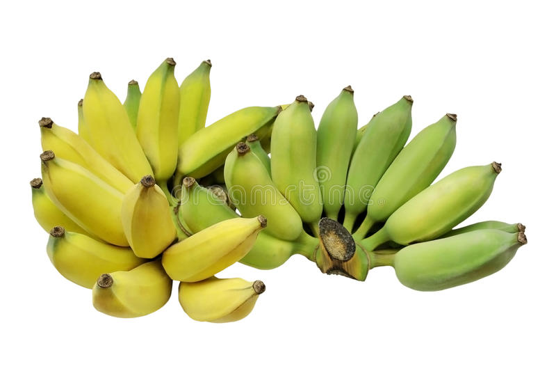 Banane cultivée ou banane thaïlandaise d'isolement sur le fond blanc photos libres de droits