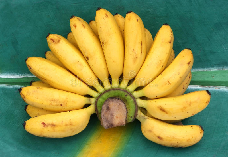 Banane dainty fresche su un foglio della banana. fotografie stock
