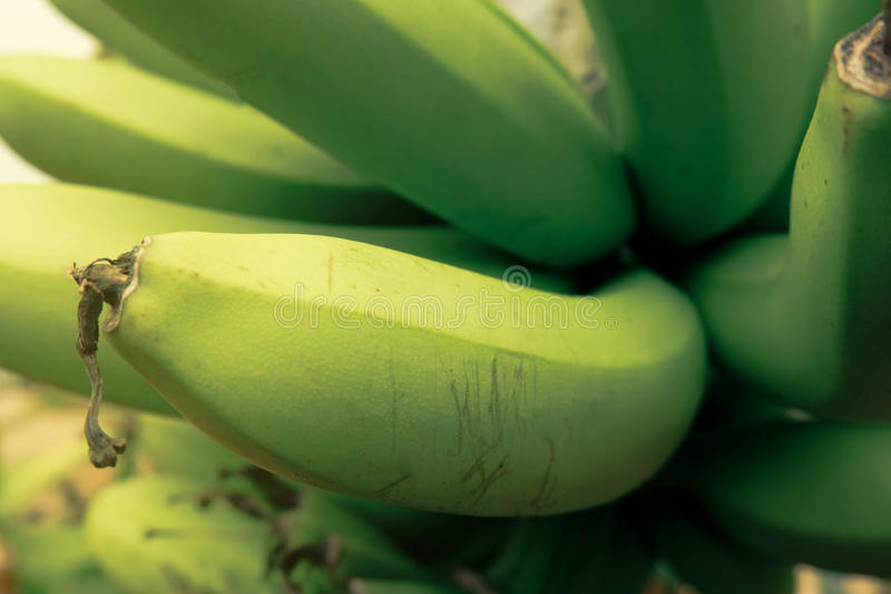 Banane de Cavendish photo stock