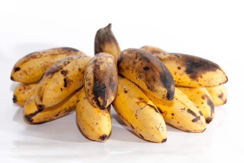 Banane di decomposizione isolate su bianco immagine stock libera da diritti