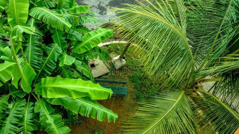 Banane et palmier lavés par pluie photos libres de droits