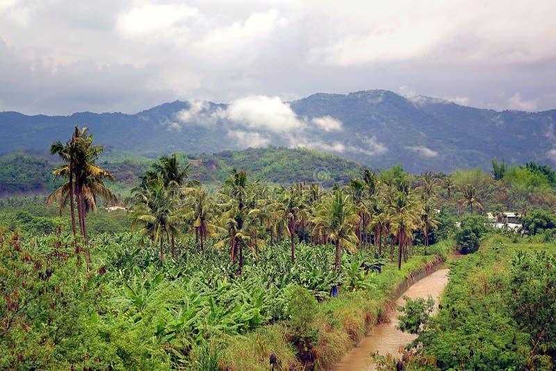 Banane et palmiers à Taïwan du sud image stock