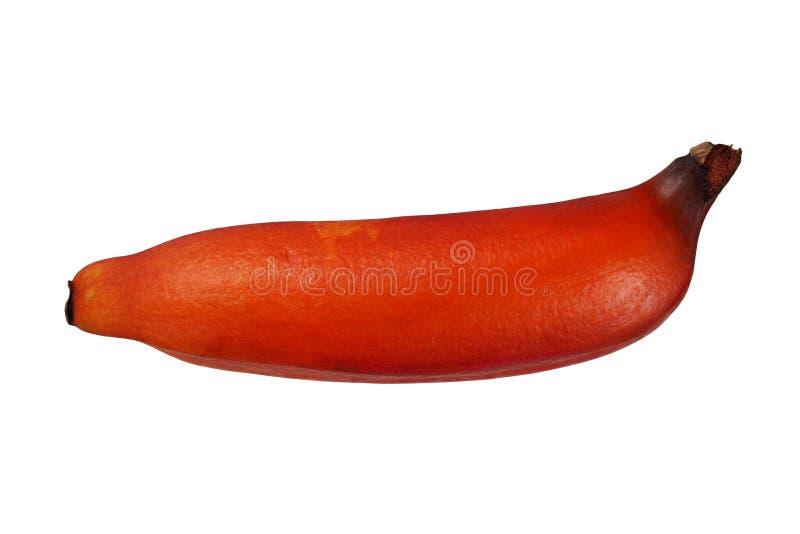 Banane rouge sur le blanc photographie stock libre de droits