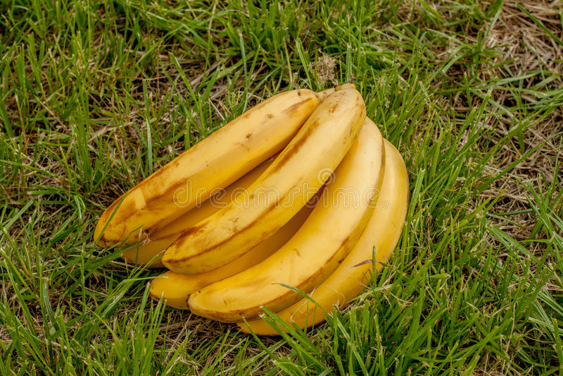 Banane sur le bois de fond image libre de droits