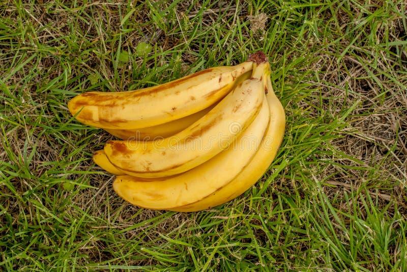 Banane sur le bois de fond photographie stock